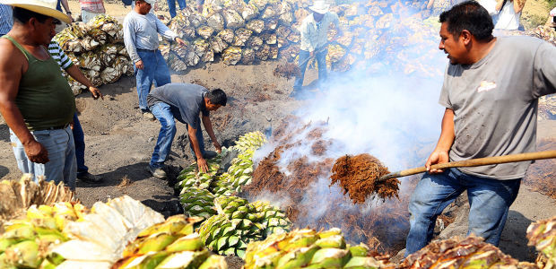 regulations in Mexico threaten artisanal mezcal production